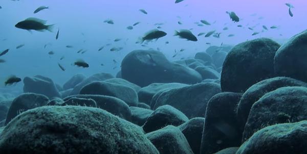 Il fondale roccioso del lago Tanganica