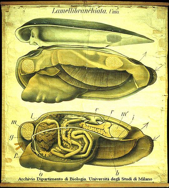 Unio pictorum: tavola parietale ad opera di Paul Pfurtscheller