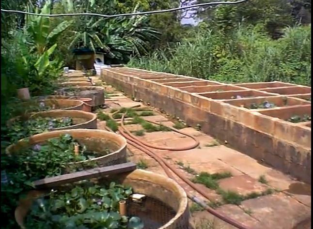 Vasche d'allevamento per Betta a Singapore